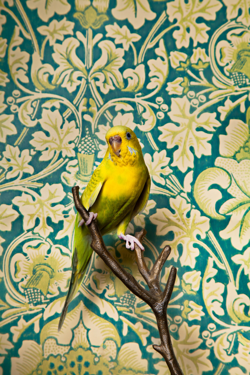 Claire Rosen, Birds of Feather, Parakeet n. 7034
